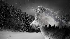 Wolf Wallpaper 4K - KoLPaPer - Awesome ...