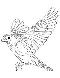 Small Picture Grosbeak in flight coloring page Download Free Grosbeak in
