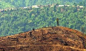 amazon rainforest deforestation.  Rainforest According To The Rainforest Action Network If Deforestation Continues At  This Rate Rainforest Will Be Entirely Lost By 2060 Intended Amazon Deforestation A