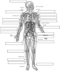 circulatory system worksheet worksheet respiratory circulatory system diagram worksheet arteries label jpg
