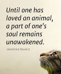 Love Animals Quotes Classy 48 Amazing Quotes About Animals And Love Cristina's Ideas