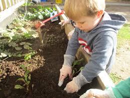 winter vegetable planting