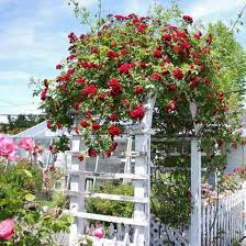 Small Picture Wooden Archways For Gardens Latest Garden Arches Rose Arches