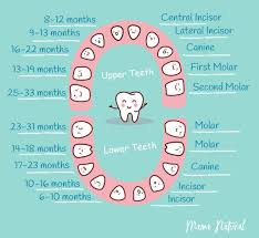 When Do Babies Get Teeth Chart Baby Teething Chart What Order Do They Come In Tooth