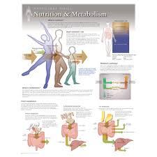 Nutrition Metabolism Laminated