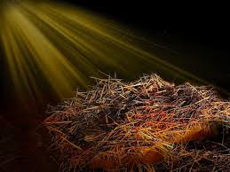Image result for Free pictures of Christmas manger hay