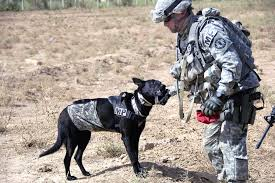 serious tell r army about your mos and or duty station redo army k9 which is its own mos