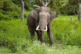 Asian Elephant wallpapers, Animal, HQ ...