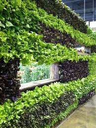 Small Picture 175 best Green Walls images on Pinterest Vertical gardens