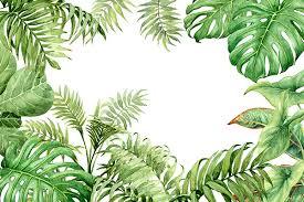 jungle background. Fine Jungle And Jungle Background