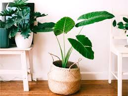 Ecco le foto delle piante d'appartamento più belle pourfemme. Vasi Per Piante Da Interno 5 Idee Per La Tua Casa Heroplants