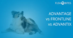 frontline plus vs advantix. Perfect Frontline Advantage Vs Advantix Vs Frontline SpotOn Treatment To Plus Vs K