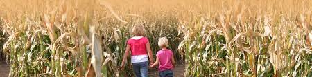 Image result for Corn maze date