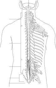 14295_50_1 autonomic nervous system on nervous system printable