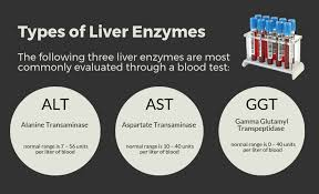 Liver Enzymes Levels Chart Elevated Liver Enzymes Natawill Nutrition