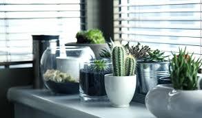 decorative plants for office. Office Design Decorative Plants For Inside Dimensions 1920 X 1129 -