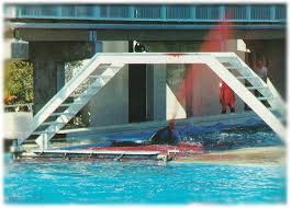 tilikum isolated. Exellent Isolated Kandu  In Tilikum Isolated