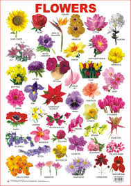 Educational Charts Series Flowers