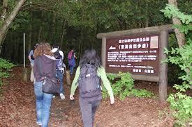 Картинки по запросу фото самоубийство в лесу японии