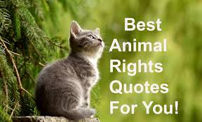 2019 Best Quotes Animal Rights The Quote Garden