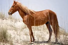 6 types of mustang horses their