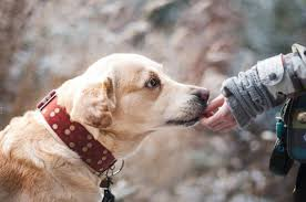 Female Dog Heat Cycle Chart Labrador Heat Cycle The Complete Guide Labrador Loving Souls