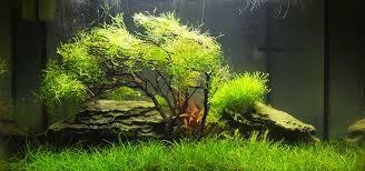 gardening for the nano aquascape