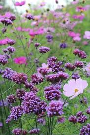 garden flower names. Delighful Garden My Favorite Plant Combinations 57 In Garden Flower Names W