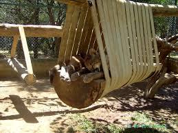 diy big cat swing set