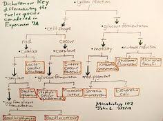 Dichotomous Flow Chart Microbiology 7 Best Micro Images Microbiology Medical Laboratory