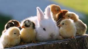 Super Cute Animals 1366x768 Resolution ...