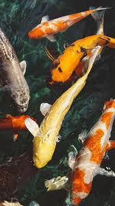 Fish Water Animal Swim iPhone 8 ...