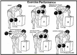 masterly iron hex dumbbell exercises for home and mercial gyms dumbbell workout charts