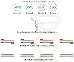 What Is Nested Pcr Genetic Education Phylogenetic Tree