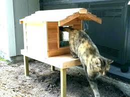 prime heated cat house outside outdoor houses photo copyright kitty warm small