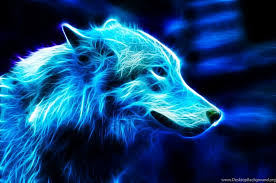 blue wolf background. Modren Wolf 1024x678 In Blue Wolf Background U