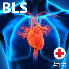 basic life support bls american red