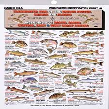 Freshwater Fish Identification Chart Fishermans Freshwater Fish Chart 8