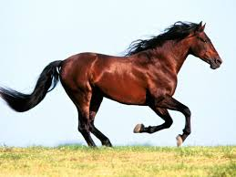 horses running in the wind. Perfect Running In The  On Horses Running The Wind