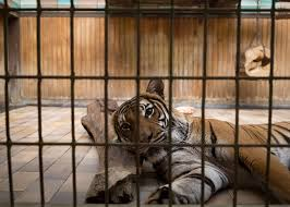 zoo animals in cages. Interesting Animals LostBehindBarsPhotosZooAnimalsEliasHassos Intended Zoo Animals In Cages