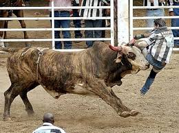 rodeo bull charging. Beautiful Rodeo Enlarge Rodeo With Bull Charging R
