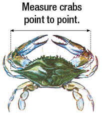 Crab Size Chart Nj Mollusks Crustaceans New Jersey Saltwater Fishing