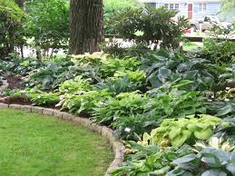 Small Picture Hosta Garden Planting Ideas 20 Wonderful Hosta Garden Ideas