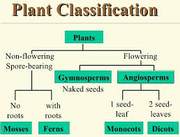 Plant Kingdom Classification Chart For Kids Effective And Creative Lesson Plans For Teachers By