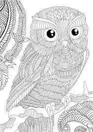 Coloring Book Owl Coloring Book Owl And Owl Coloring Book Owl