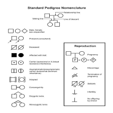 Genetic Pedigree Chart Symbols Standard Pedigree Nomenclature Diagram Shows Common Symbols