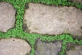 patio stones with grass in between.  Stones Plants Growing In The Gaps Between Stones Give A Rustic Look Throughout Patio Stones With Grass In Between