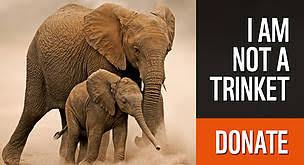 African Elephants Wwf