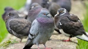 Seit 1970 wird in deutschland jedes jahr ein neuer vogel gewählt. Vogel Des Jahres 2021 Konnte Ihr Lieblingsvogel Vogel Des Jahres Werden Bayern 1 Radio Br De