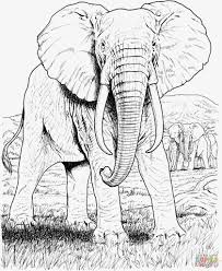 free coloring pages animals elephants fresh african elephant coloring page of 20 nice free coloring pages